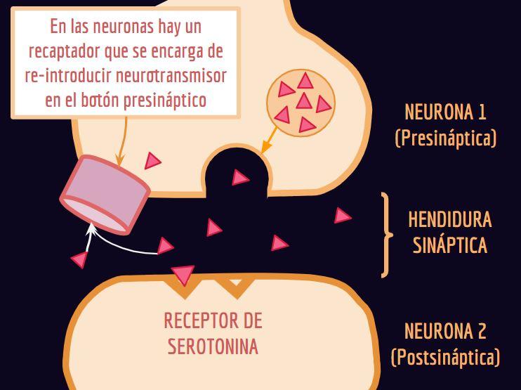estado de ánimo ciclo menstrual,la regla a los sentimientos,ciclo menstrual, sentimientos, regla