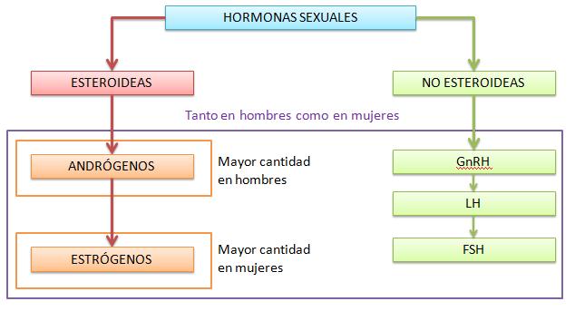 hormonas sexuales clasificación y efectos