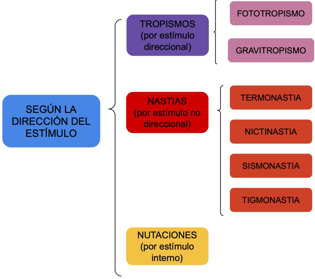 Movimientos de las plantas clasificados según la dirección del estímulo.