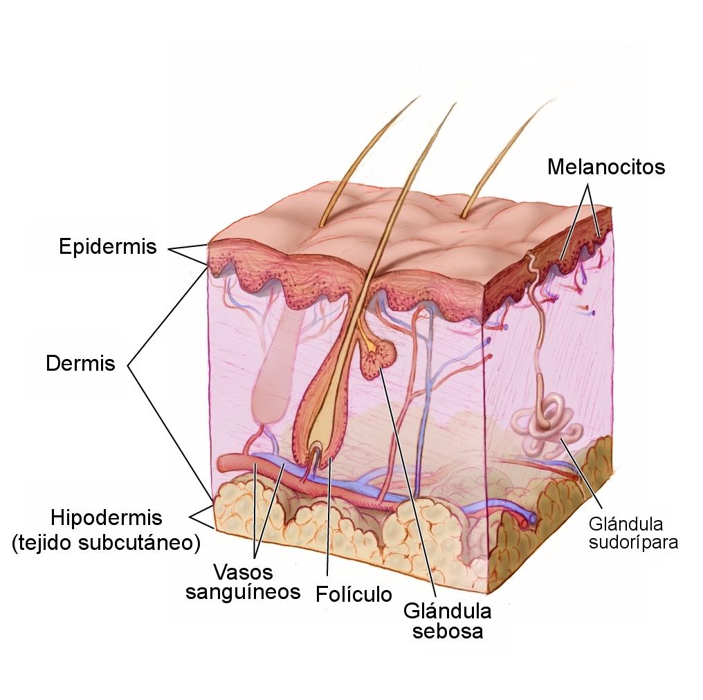 por qué usar fotoprotector para la piel
