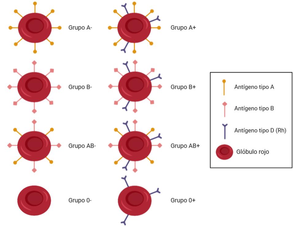 qué es el grupo sanguíneo