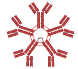 Estructura de un anticuerpo tipo M producido por los linfocitos B pertenecientes a las celúlas del sistema inmunitario.