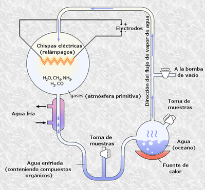La hipótesis sobre el origen de la vida en la Tierra de Oparin-Haldane forma la base de la gran mayoría de hipótesis aceptadas hoy en día. Muller-Urey realizaron un experimento en el año 1952, en el cuál recrearon la atmósfera descrita por Oparin-Haldane y pudieron crear a partir de moléculas inorgánicas 23 aminoácidos diferentes en el laboratorio.