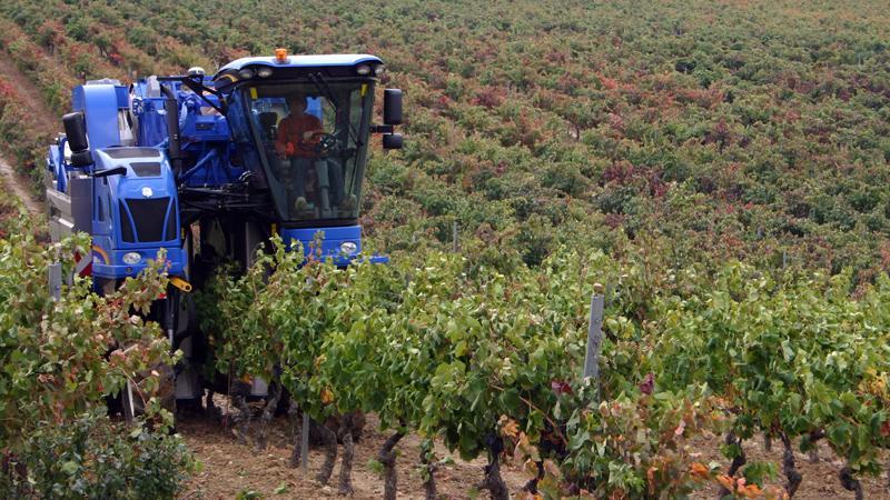 vino, bodega, terroir, viñedo, vendimia, recogida de la uva, uva y humanos, influencia de los humanos en el vino