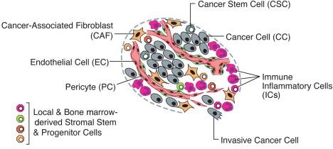 Esquema del microambiente tumoral.