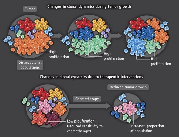 Poblaciones de células tumorales y su variación con la quimioterapia.