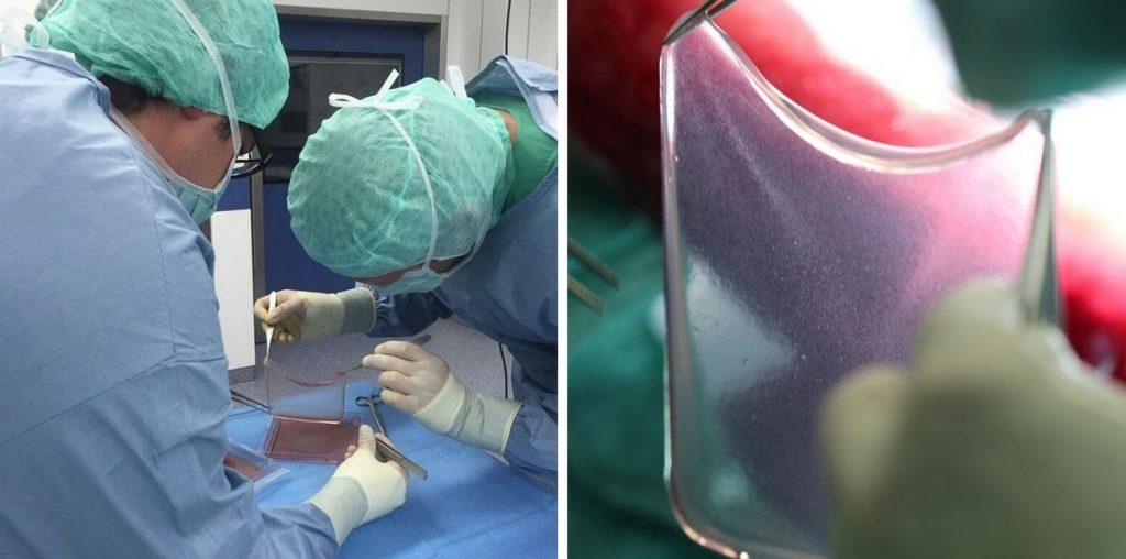 Piel sintetizada in vitro.