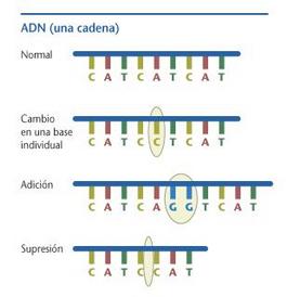 Mutación en el material genético
