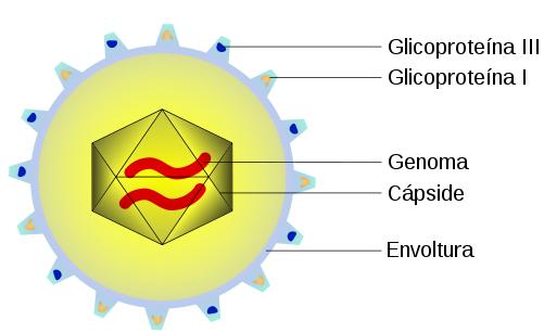 Partes de un virus